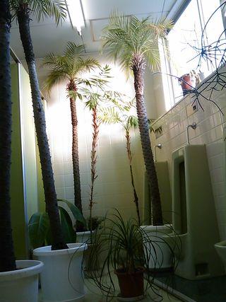 トイレの温室