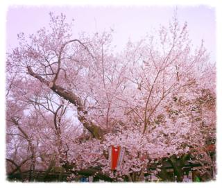 高遠城址公園のサクラ 2013-04-07