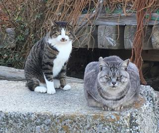 1 三戸浜ボス猫