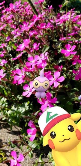 芝桜満開✿