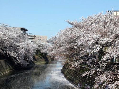 大岡川プロム