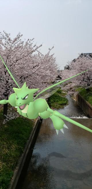 桜並木を駆け抜けるストライク♪