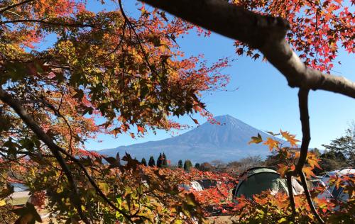 21モミジ越しの富士